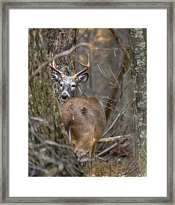 Framed Print featuring the photograph Just One Look by Alan Raasch