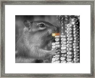Just One More Bite Framed Print by Kenneth Krolikowski