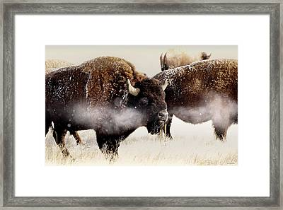 Just One Of The Boys Blowing Off A Little Steam Framed Print