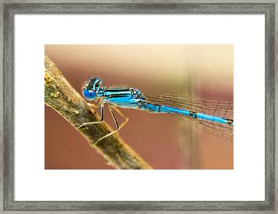 Just Patiently Waiting Framed Print by Douglas Barnett