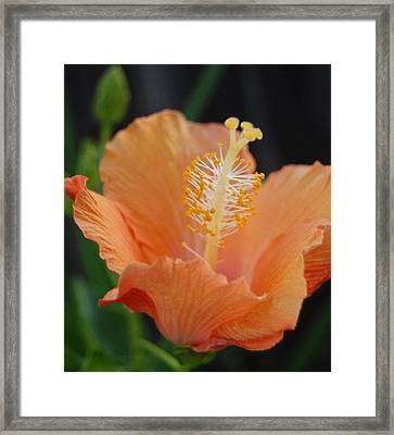 Just Peachy Framed Print by Jean Booth