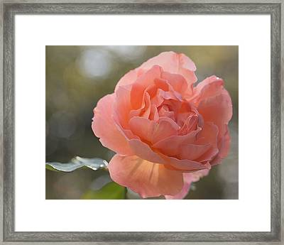 Framed Print featuring the photograph Just Peachy by Julie Andel
