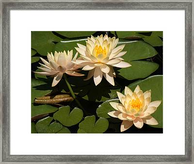 Just Peachy Framed Print by Kat Dee