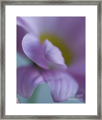Just Petals Framed Print