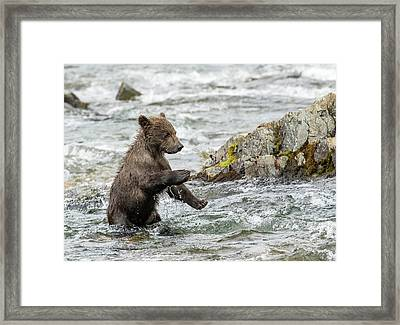 Framed Print featuring the photograph Just Practicing  by Cheryl Strahl