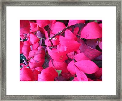 Just Red/pink Framed Print