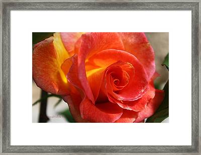 Just Rose Framed Print by KatagramStudios Photography