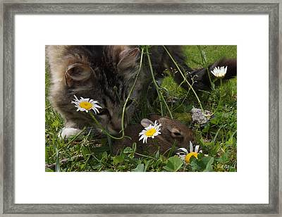 Just Say No Framed Print by Bill Stephens