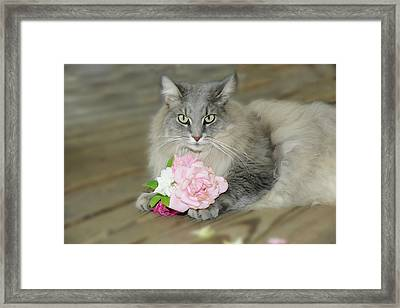 Just Scrumptious Framed Print