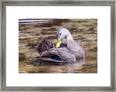 Just So Framed Print by Julie Cameron