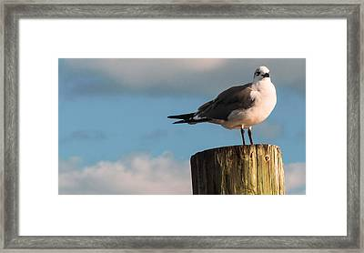 Just Standing On The Dock Framed Print by Phillip Burrow