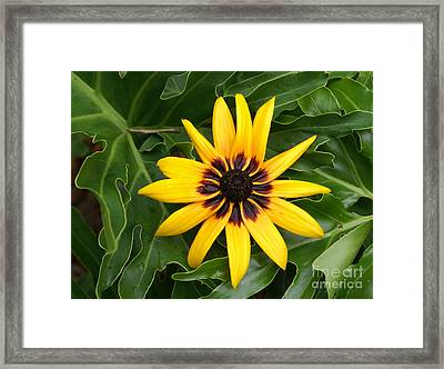 Just Sunning Framed Print by Debbie May