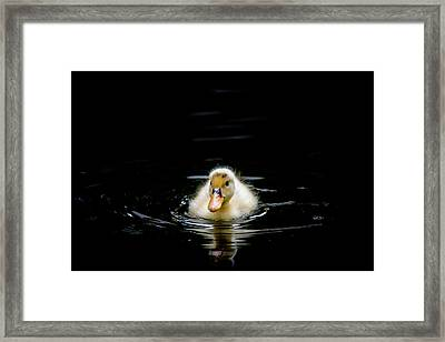 Just Swimming Framed Print