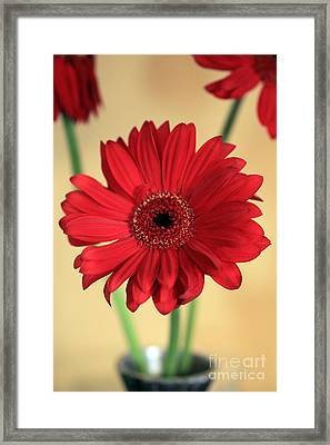 Just The One Framed Print