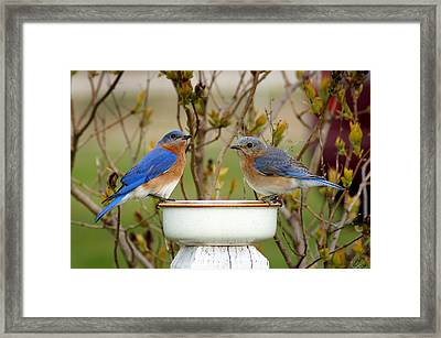 Just The Two Of Us Framed Print by Bill Pevlor