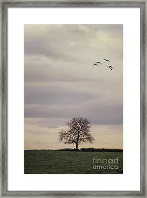 Just To Break Free Framed Print by Evelina Kremsdorf