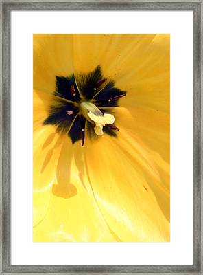 Just Tulip Framed Print