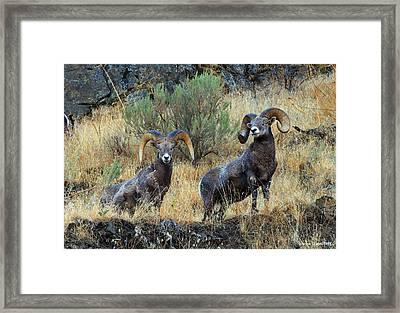 Just Us Framed Print by Steve Warnstaff