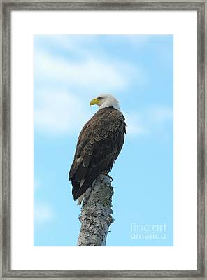 Just Watching Framed Print by Sandra Updyke