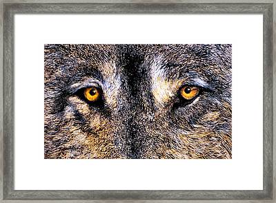 Just Watching Wolf Framed Print by JoLyn Holladay