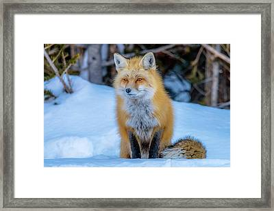 Just Watching Framed Print