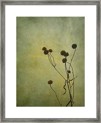 Just Weeds . . . Framed Print