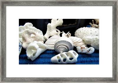 Just White Seashell 1 Framed Print by Danielle  Parent