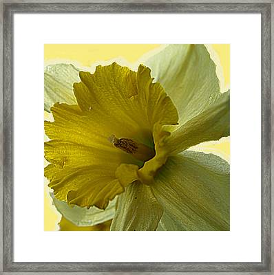 Just Yellow Framed Print by Kim