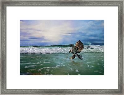 Juvenile Eagle At Sea Wildlife Art Framed Print