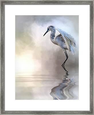 Juvenile Heron Framed Print