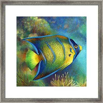Juvenile Queen Angel Fish Framed Print by Nancy Tilles