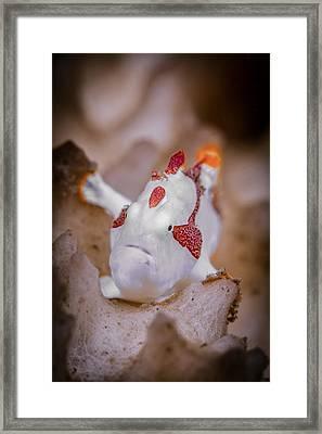 Juvenile Warty Frogfish Framed Print