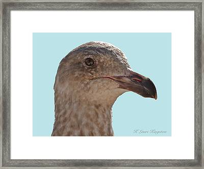 Framed Print featuring the photograph Juvenile Western Gull Bird by K L Kingston
