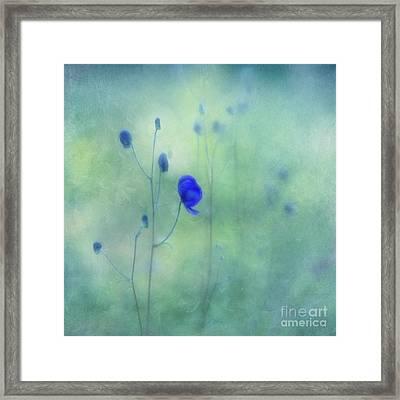 Indigo Framed Print by Priska Wettstein