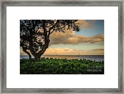 Framed Print featuring the photograph Ka'anapali Plumeria Tree by Kelly Wade