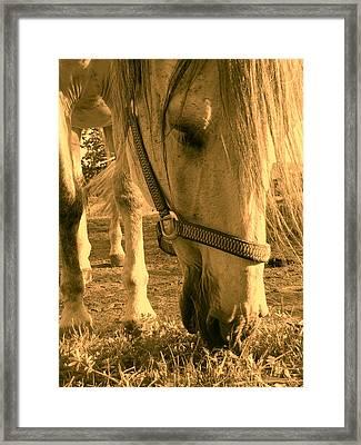 Kahn I Framed Print