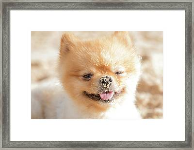 Kai Loves The Beach Framed Print
