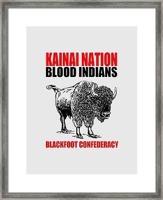 Kainai Nation Bison Framed Print by Otis Porritt
