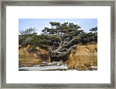 Kalaloch Hanging Tree Framed Print by Pelo Blanco Photo