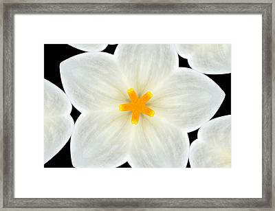 Kaleidoscope Of A Calla Lily Framed Print by Cathie Tyler