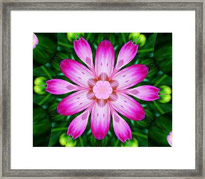 Kaleidoscope Of A Dahlia Framed Print by Cathie Tyler