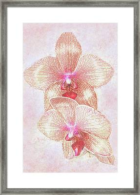 Framed Print featuring the digital art Kaleidoscope Orchid  by Jane Schnetlage