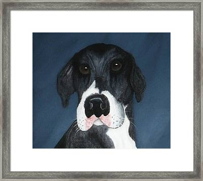 Kane Framed Print by Rebecca  Fitchett