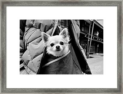 Kangaroo Dreams Framed Print