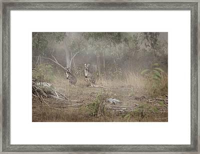 Kangaroos In The Mist Framed Print by Az Jackson