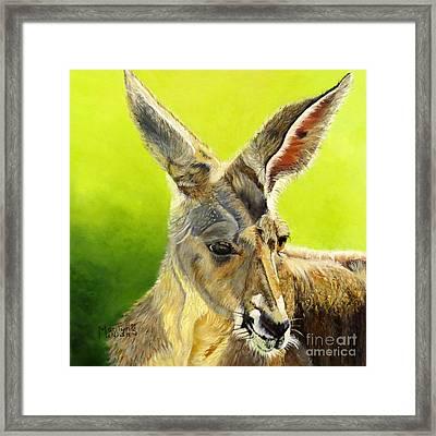 Kangeroo Framed Print