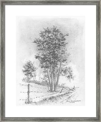 Kansas-cottonwood Framed Print