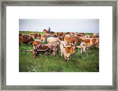 Kansas Flint Hills Longhorns Framed Print