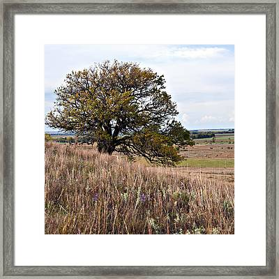 Kansas One Tree Hill Square Framed Print by Lee Craig