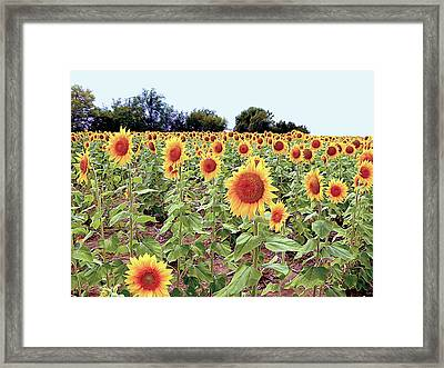 Kansas Sunflower Field Framed Print